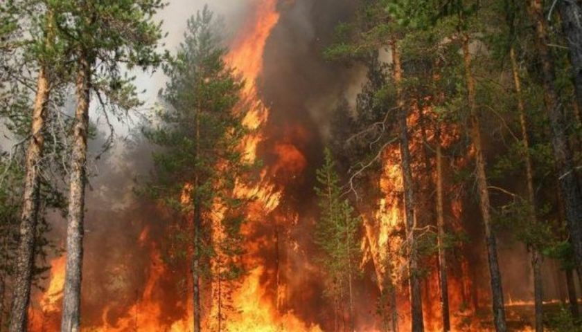 Західне узбережжя США потерпає від сильних лісових пожеж