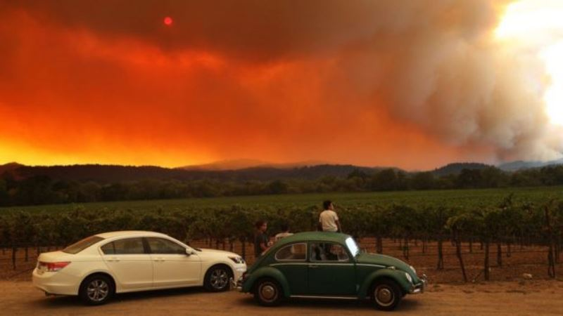 У каліфорнійській долині Napa згоріли виноградники