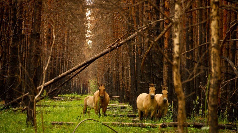 Чорнобильський заповідник став природоохоронною територією світу